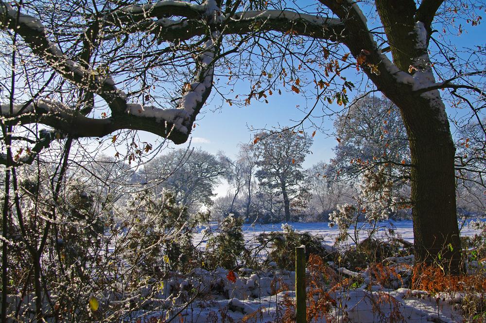 Winter eight