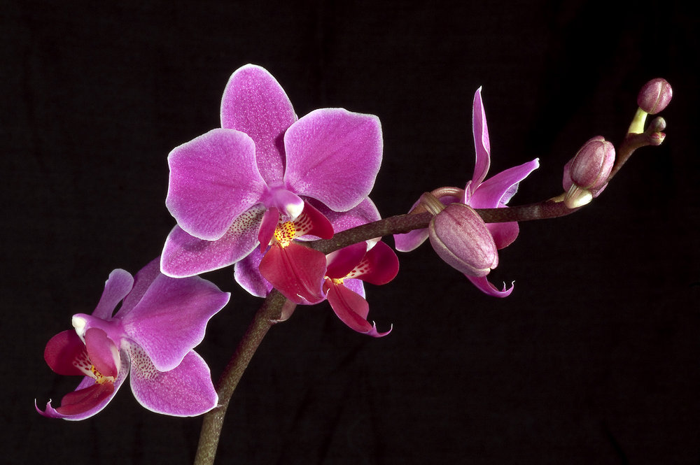 Just an orchid.