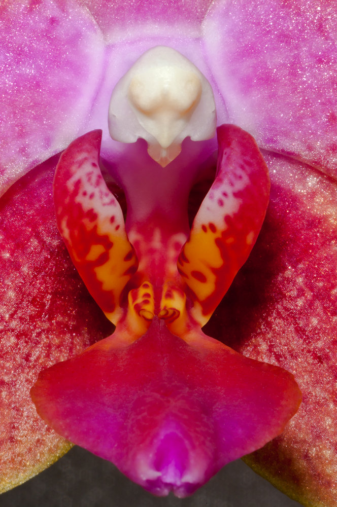 Mighty Mekon discovered hiding in orchid!