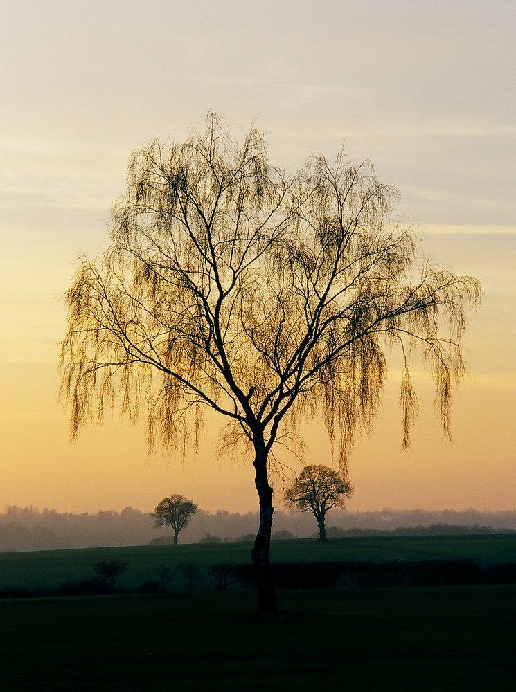 Twilight in Hertfordshire
