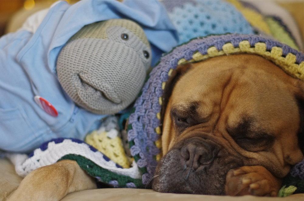 Dog (Max) is a monkeys best friend