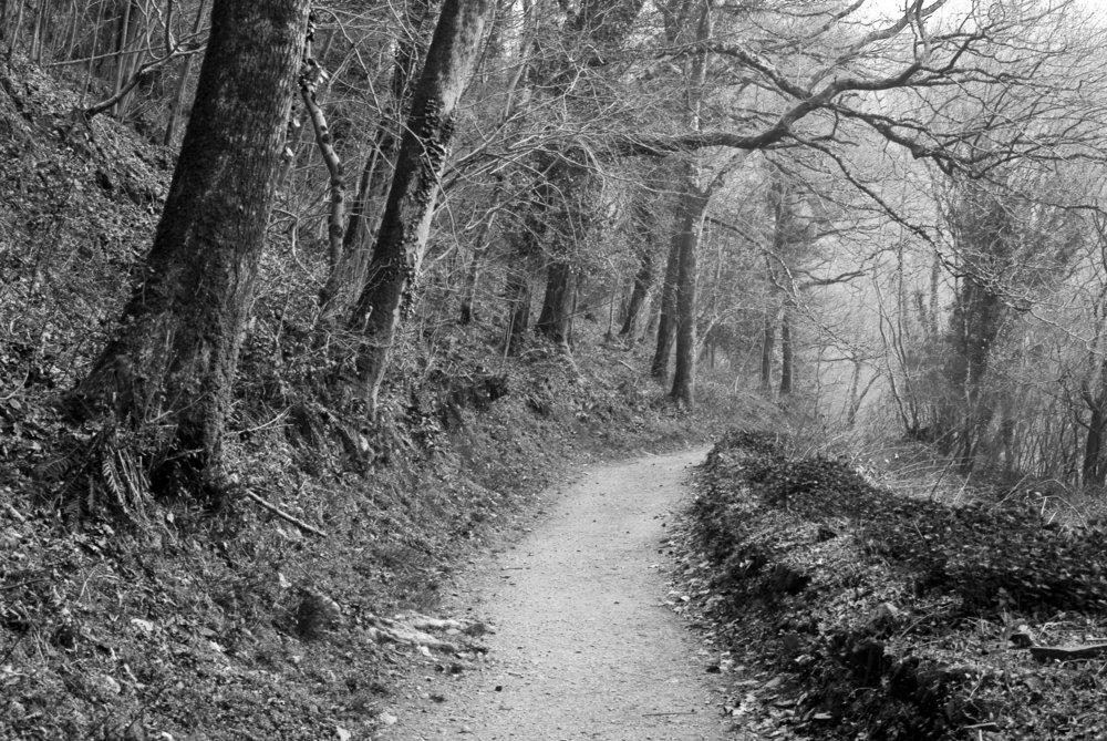 Valley Path to Heddon's Mouth, Devon