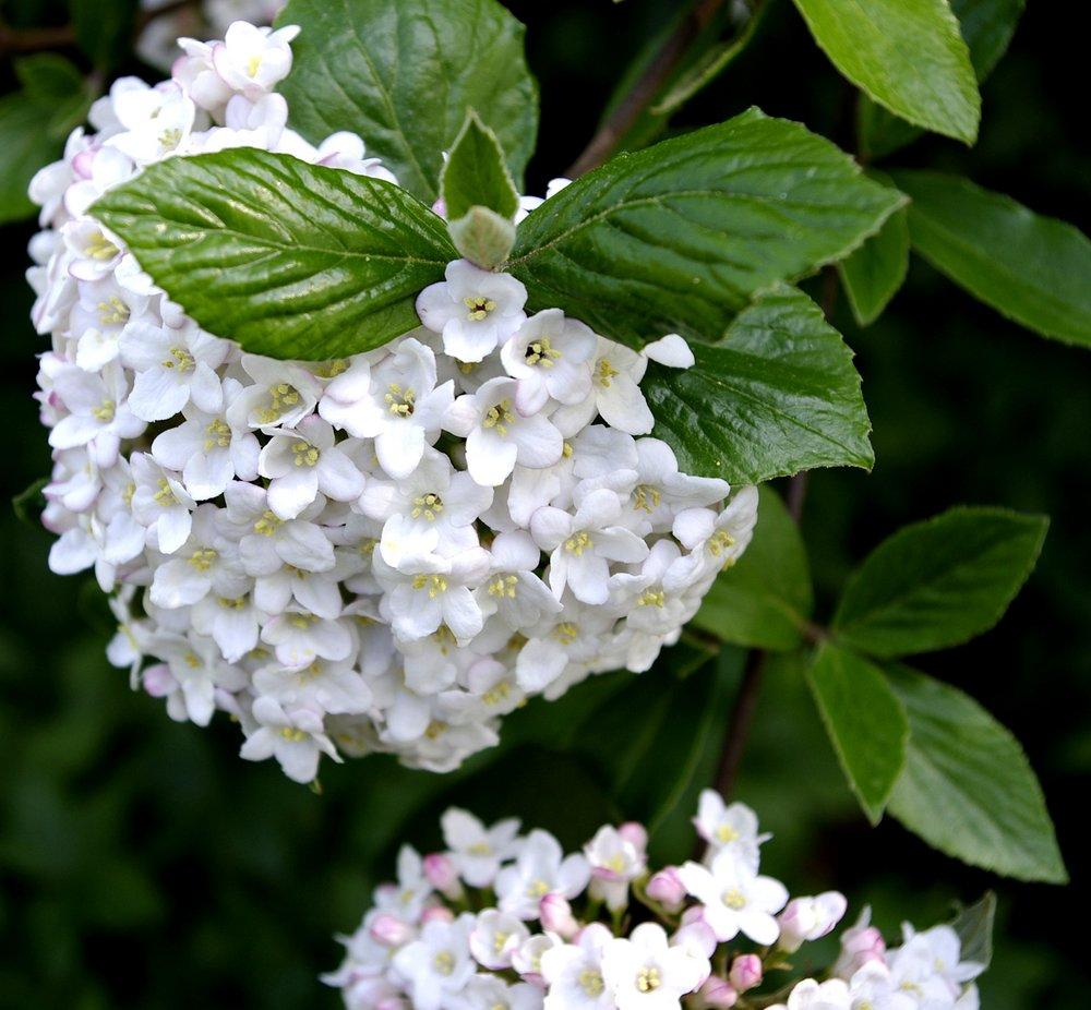 Blossom, no 2