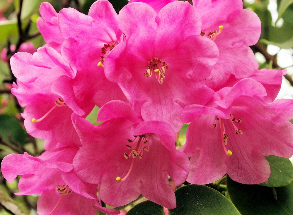 Blossom, no 3