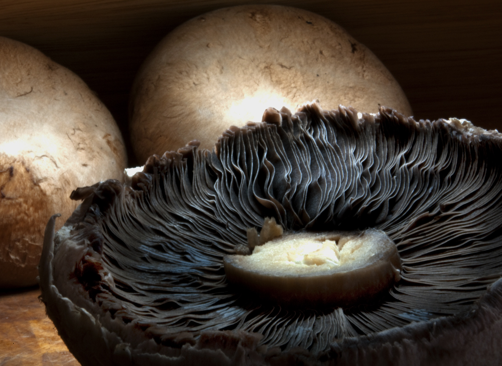 Is there mushroom in the kitchen?