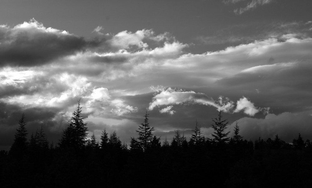 Sky behind the Pines