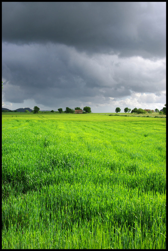 Wheat-field with Approachinging Storm