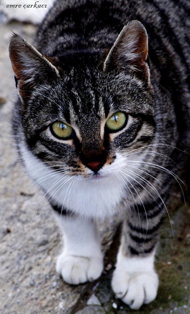 CAT !