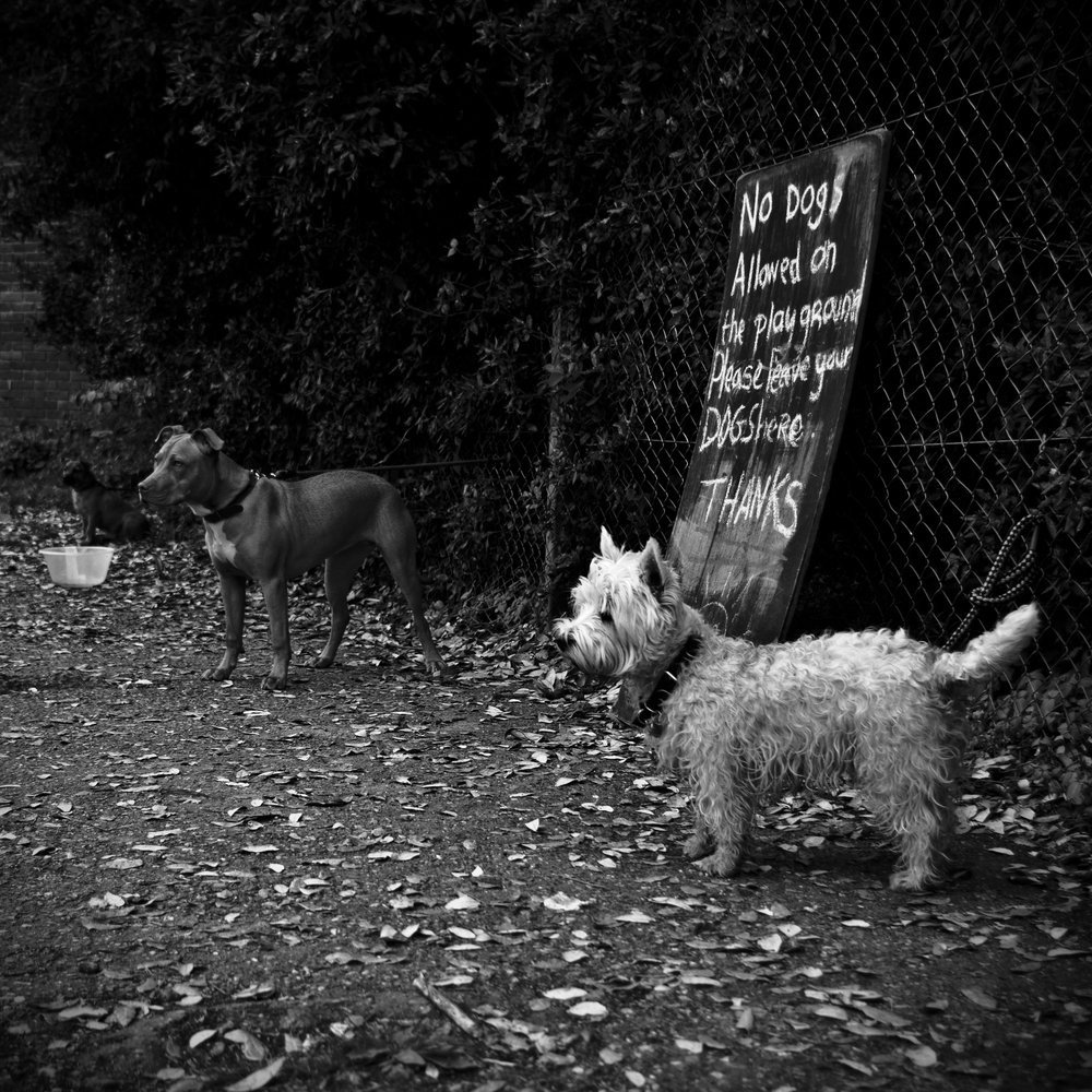 no dogs allowed on the playground