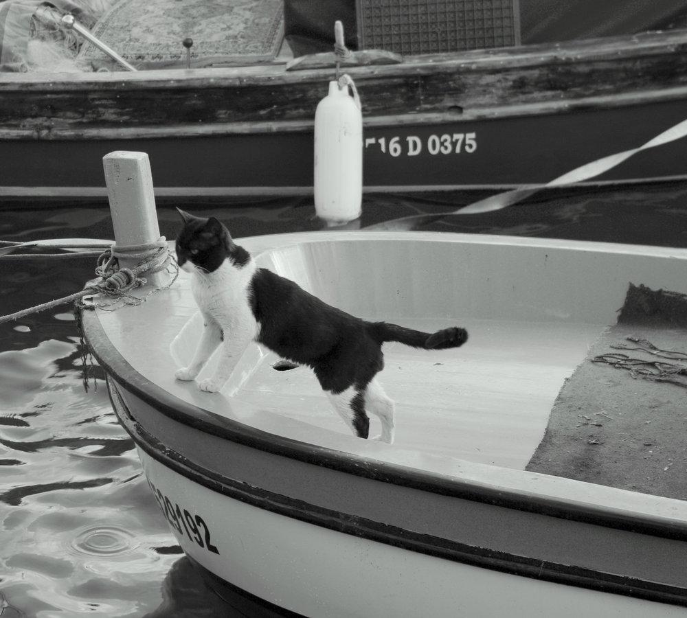 No Fish Today!