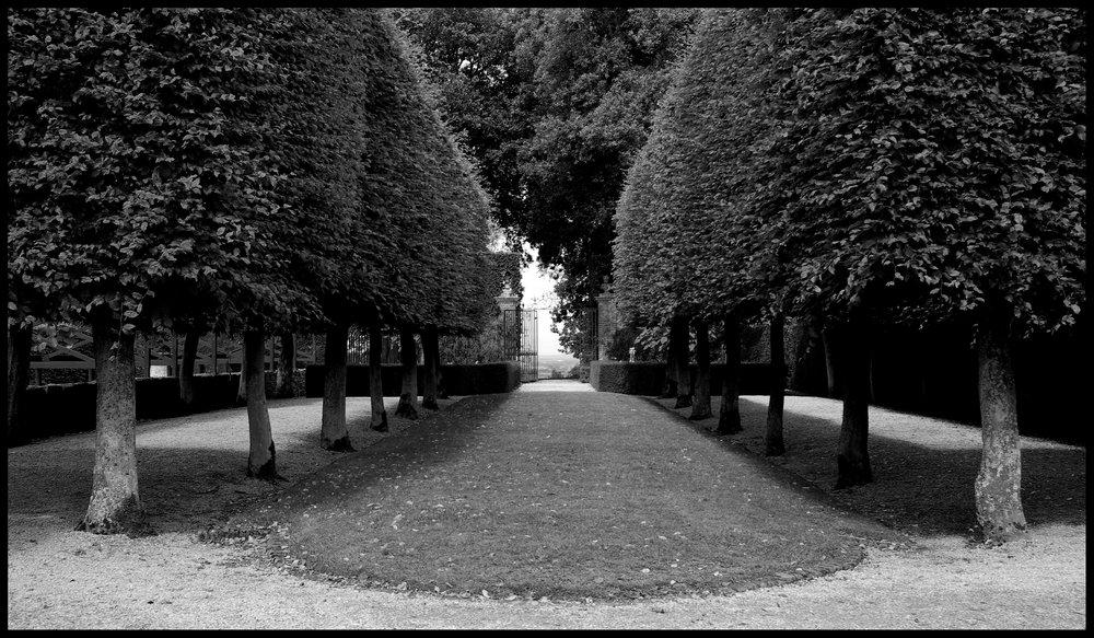 Clipped trees, Hidcote Manor Gardens, Glous.