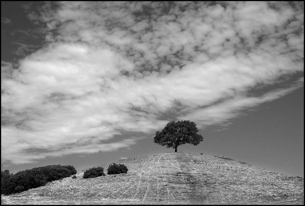 Burrow Hill, Somt.