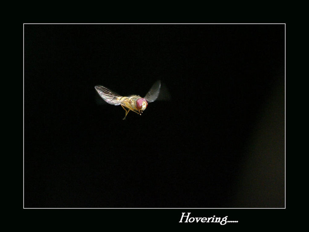 Hovering