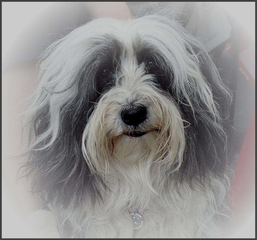 Portrait of Daisy Again