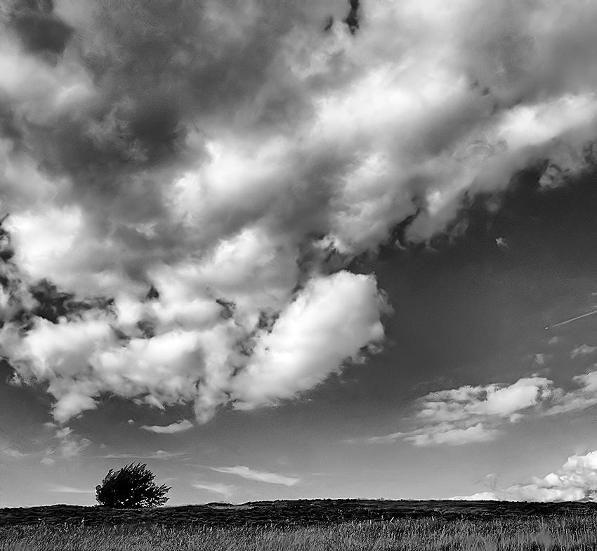 Small tree, big sky
