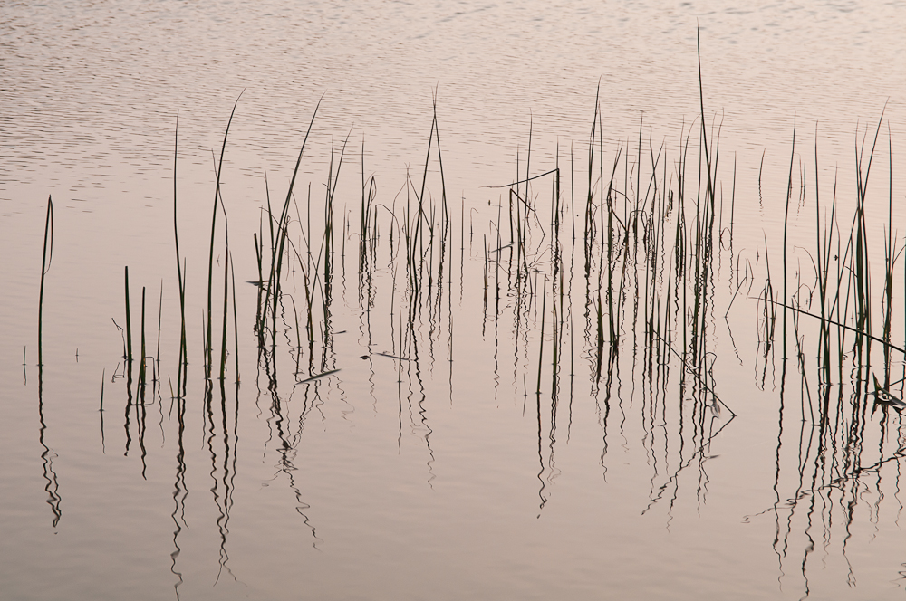 tranquility 2