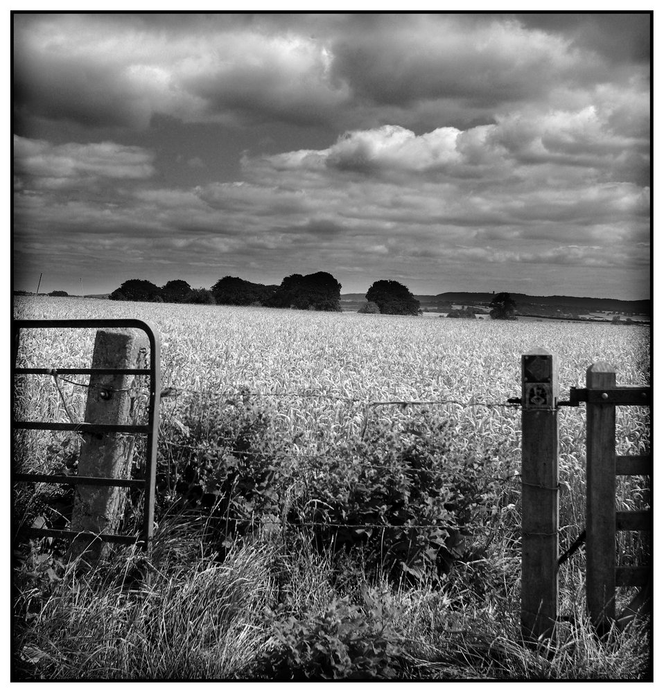 Wheat-field with Passing Clouds