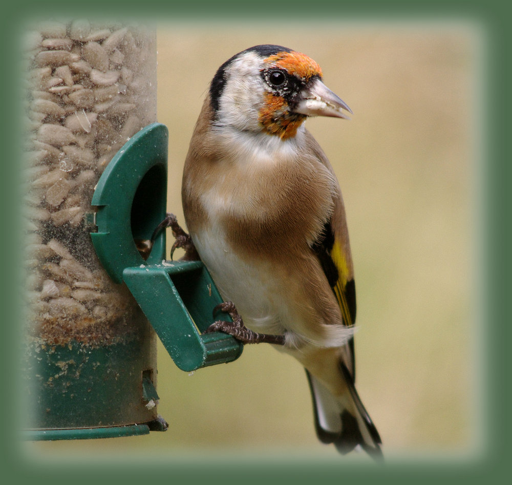 Sunflower Seed Lunch