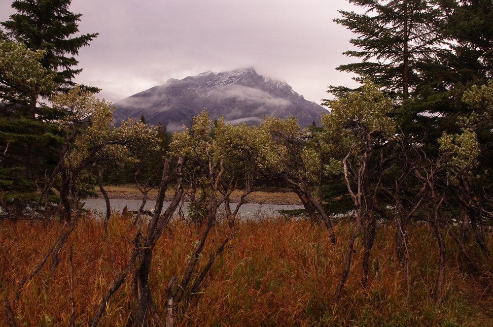 lovely fall in the Canadian Rockies