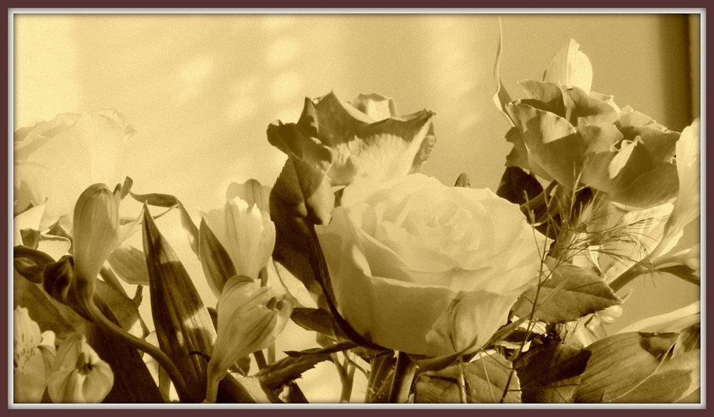 Autumn roses.