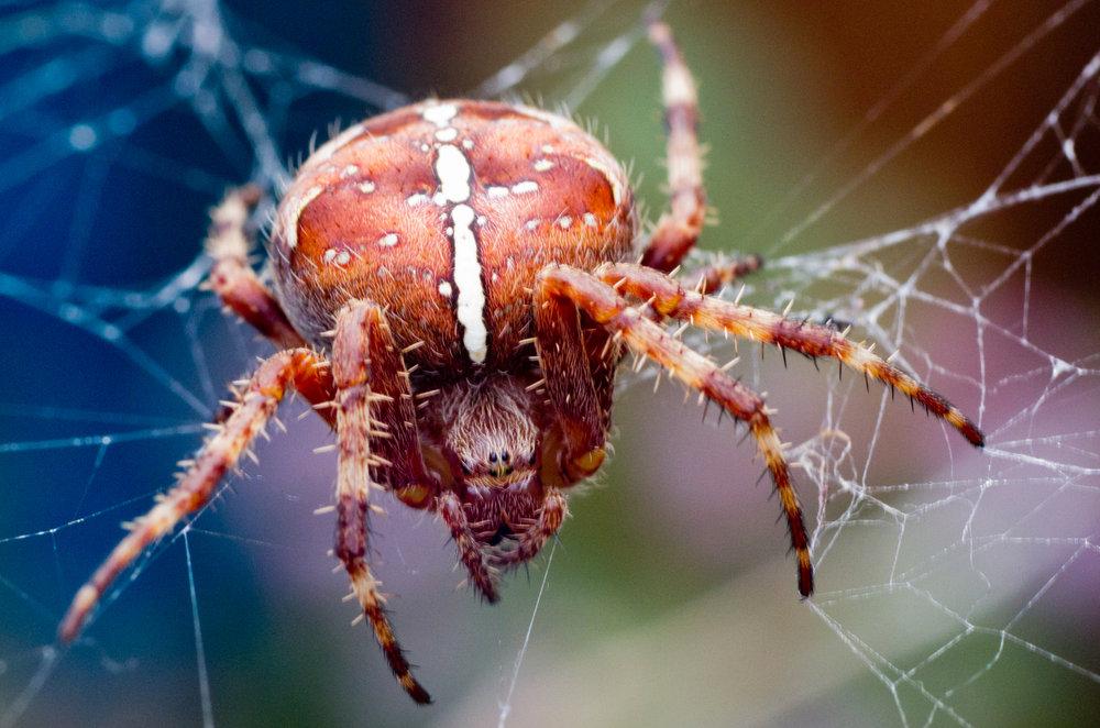 Incy Wincy Garden Spider