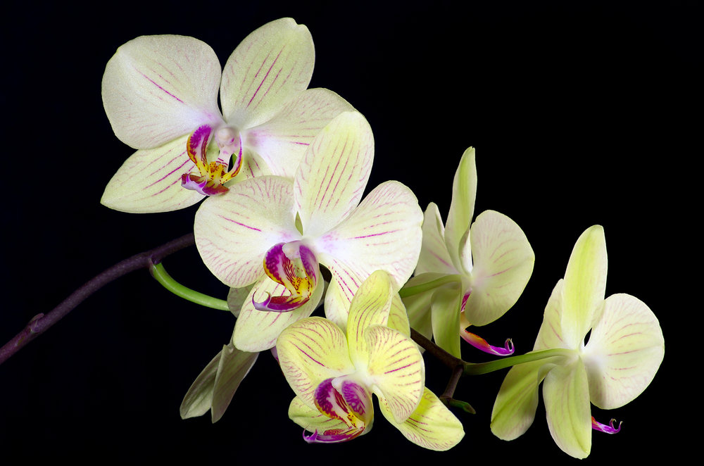 Orchid Stack