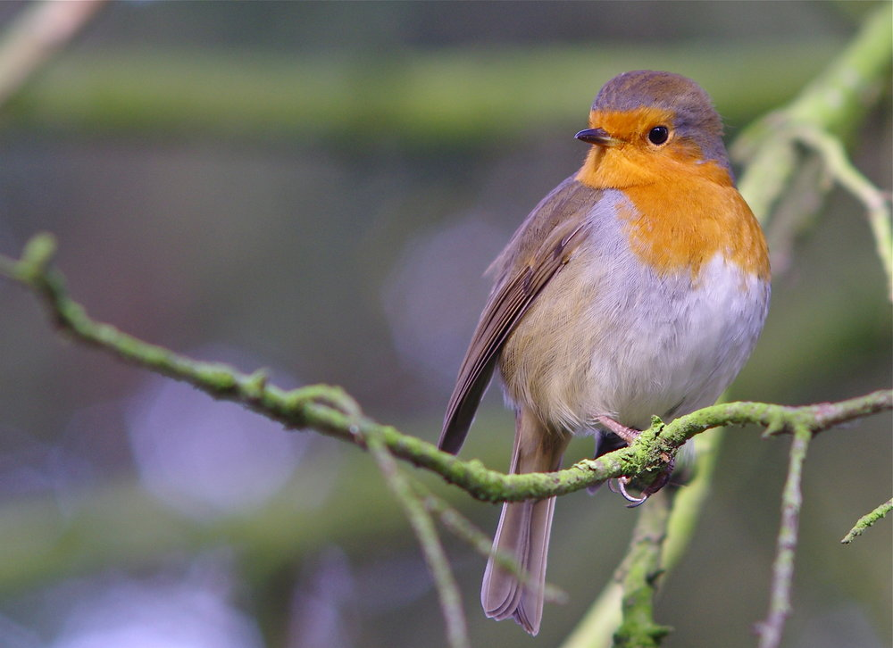 Xmas sparrow