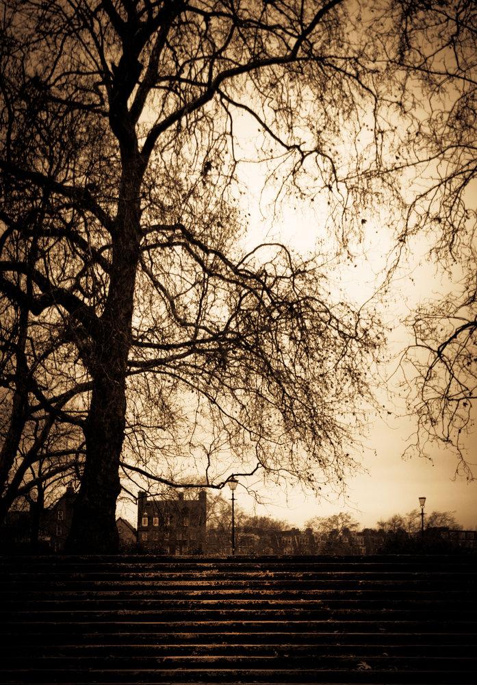as seen from Battersea Park