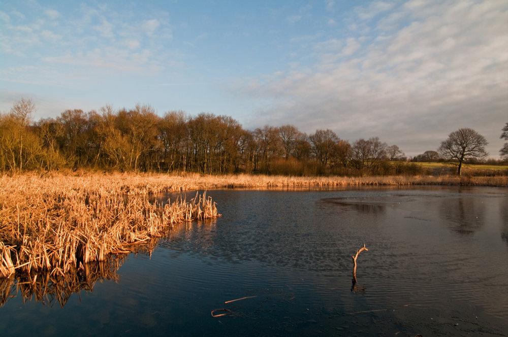 Lostock Pond