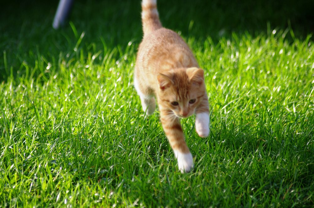 Our Young Cat Leaping Around