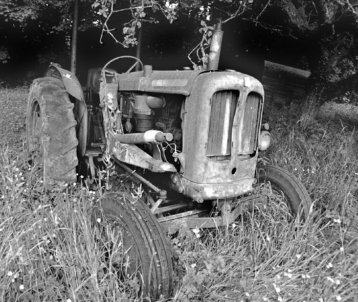 'Out to grass' B&W