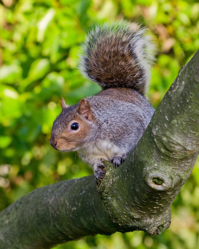 Any nuts?