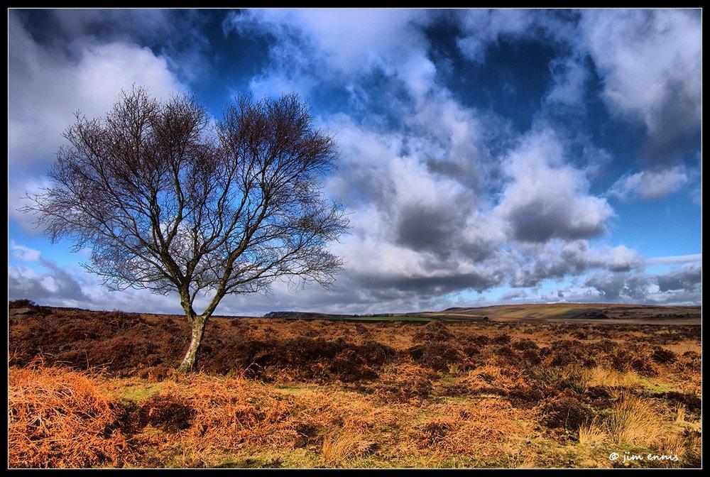 Baslow Tree