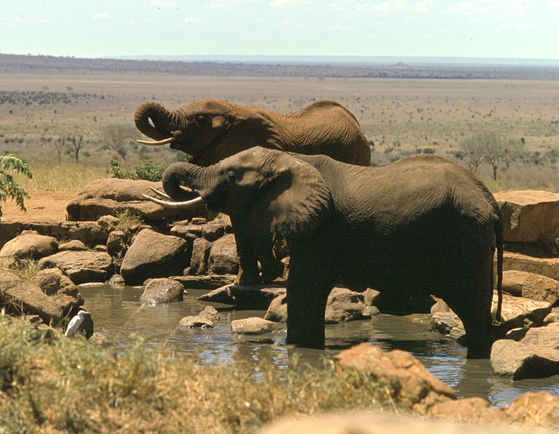 Elephants at Salt Lick waterhole