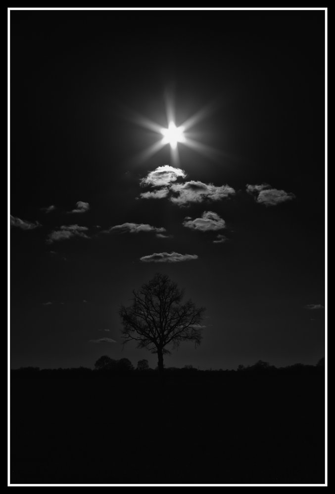 Tree and Star