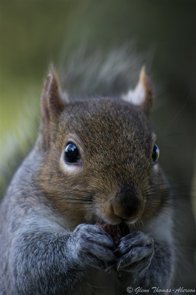 Alfred the squirrel