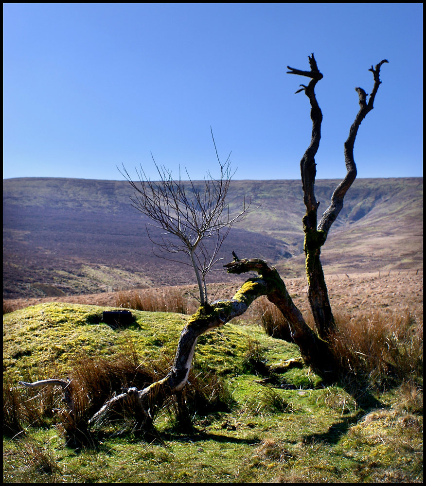 Dead tree in the Black Mountains