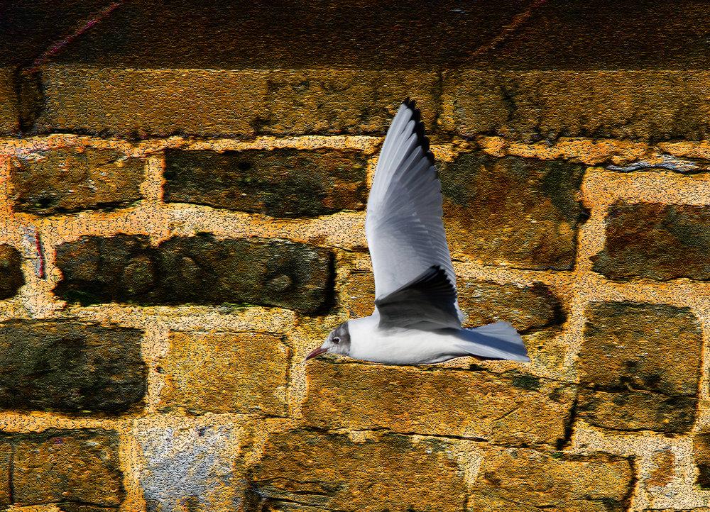 gull (4)