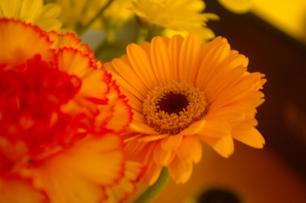 Orange Gerbera and carnation