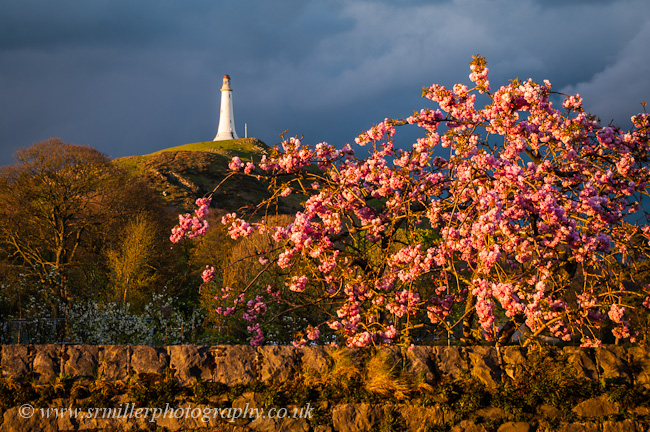 Hoad Monument and Blossom