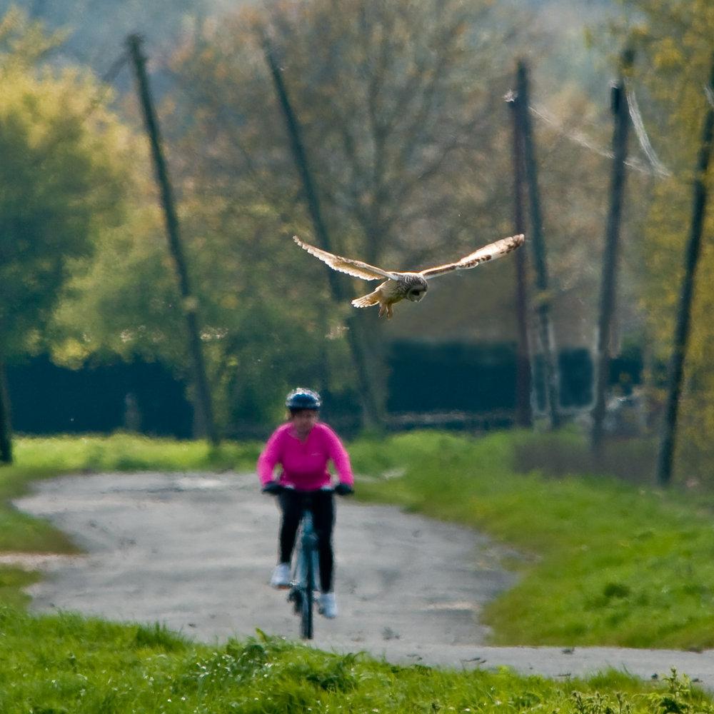 Owl Road