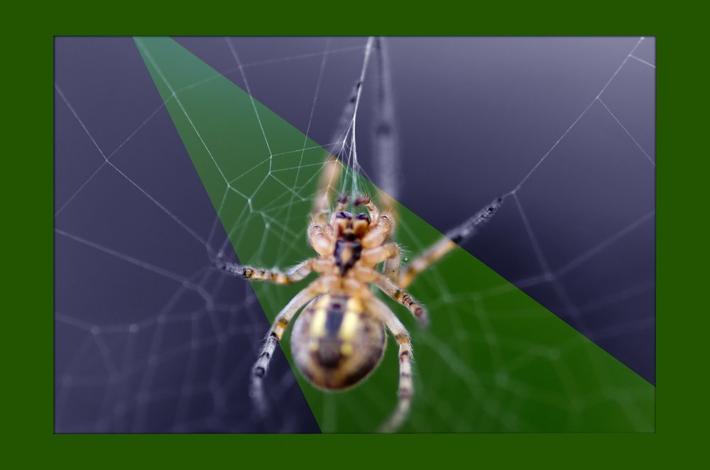 Along Came A Spider In Photoshop