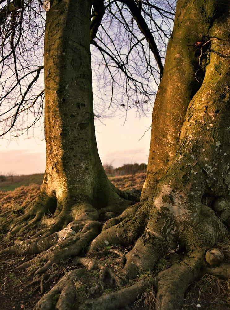 two trees v2