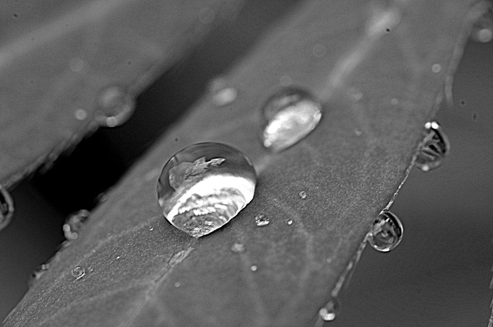 Droplets on Leaf
