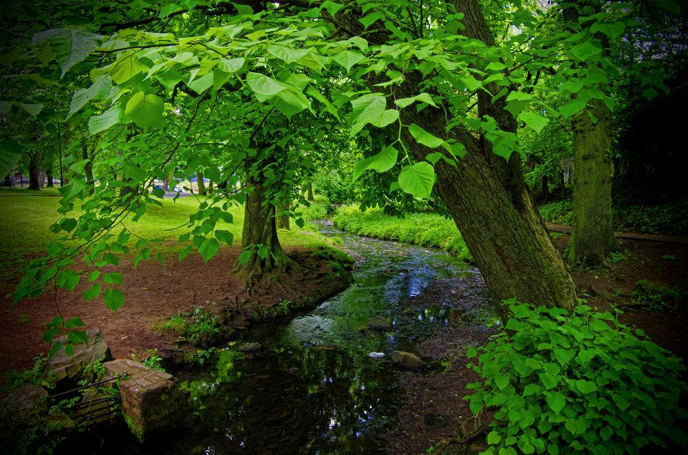 Green canopy.