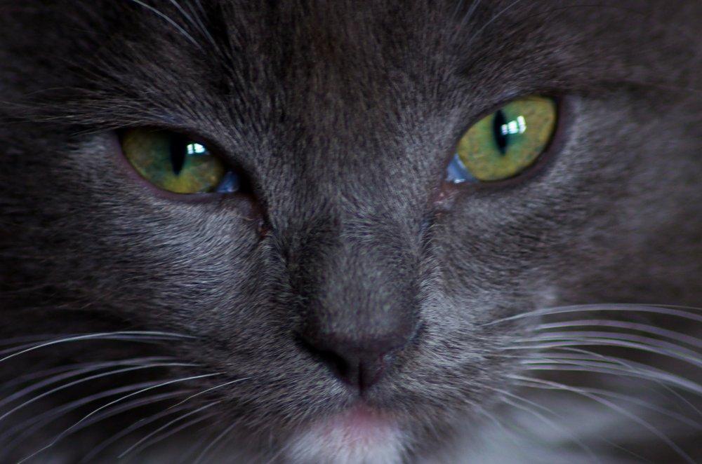 Cat;s Eyes