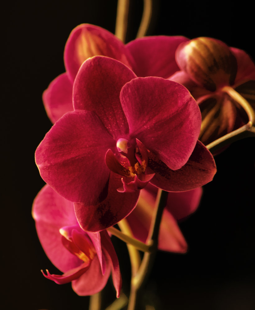 Orchid at sunset