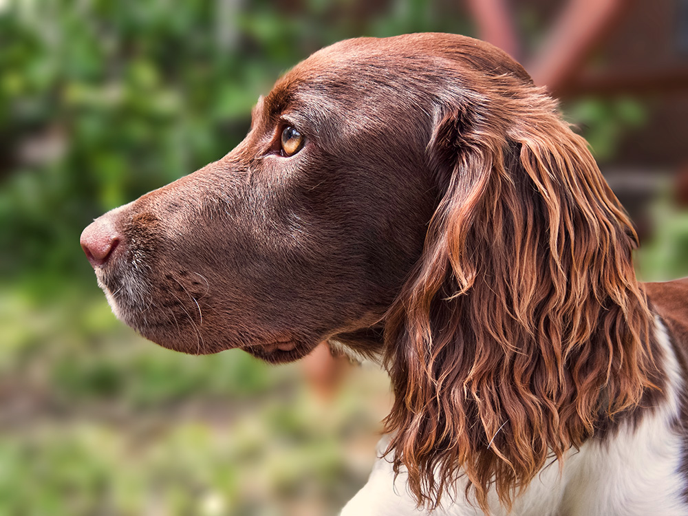 Dog (Pentax Q)