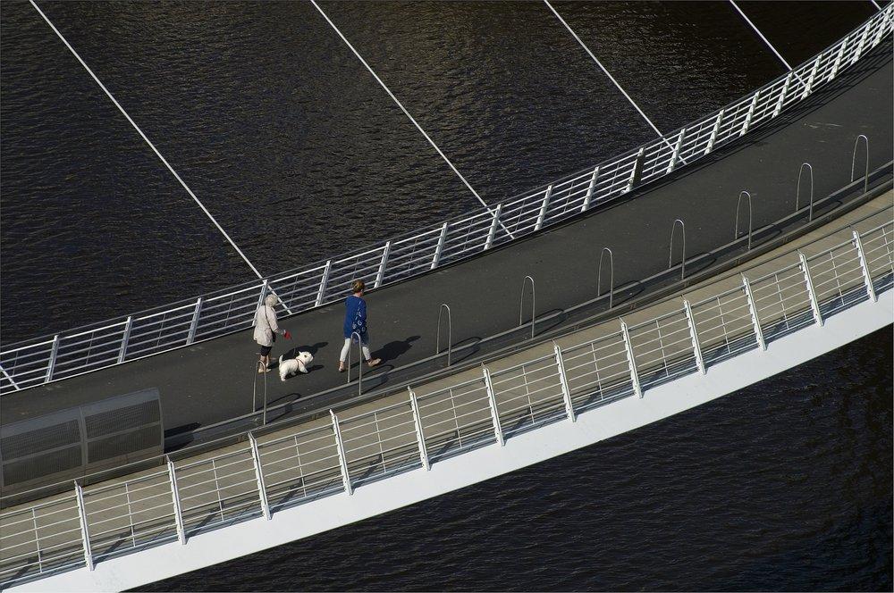 Dog on the Tyne