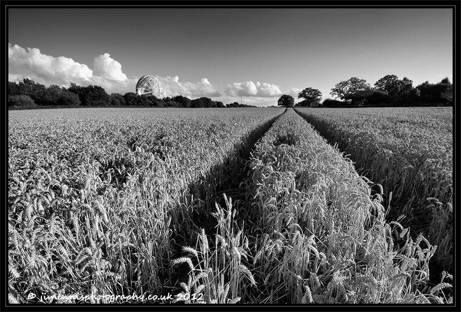Jodrell Bank wheat field